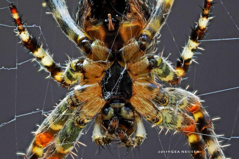 Foto van de maand: geen herfst zonder spin