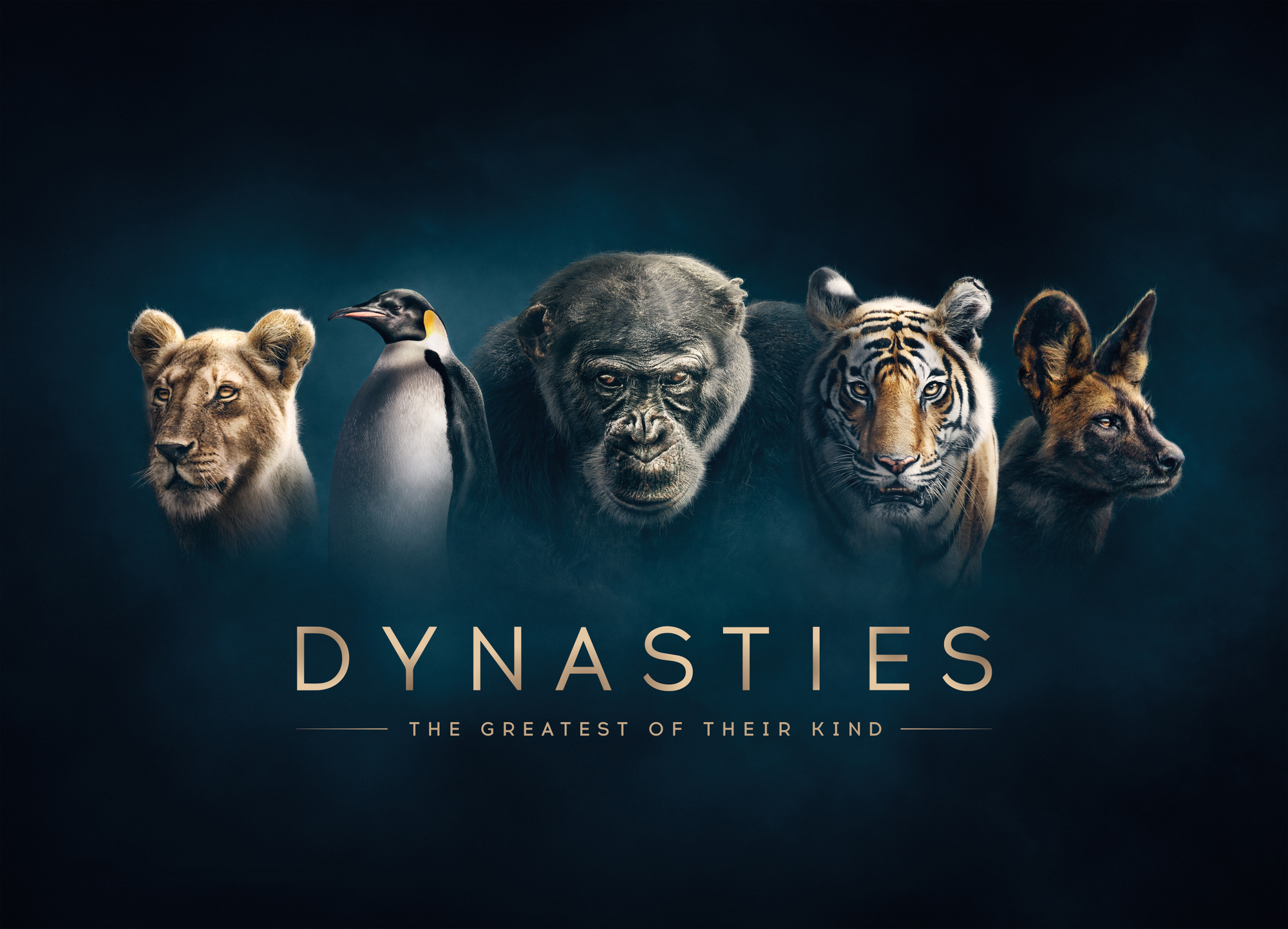 Binnenkort op tv de gloednieuwe BBC-natuurserie Dynasties, een aanrader!