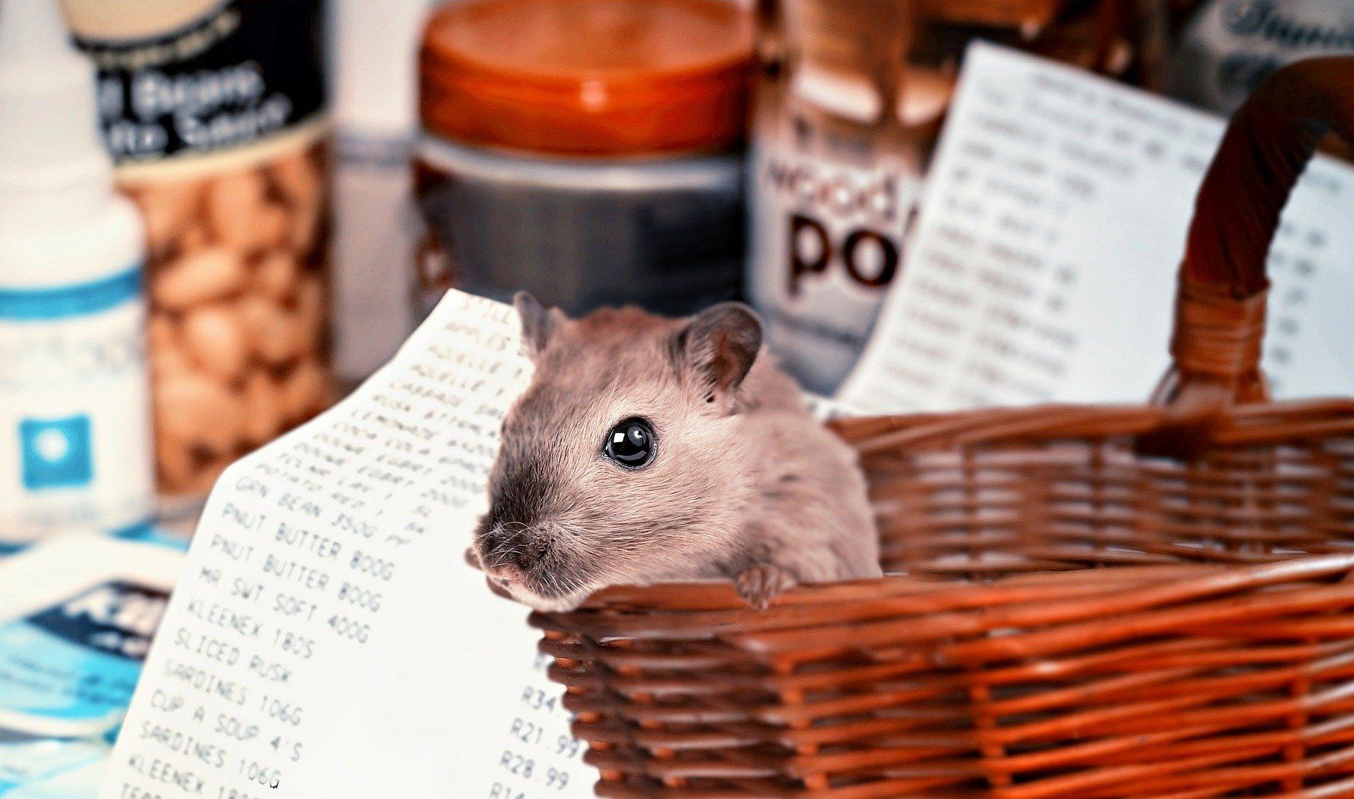 Hamsteren zorgt voor recordomzet in supermarkten